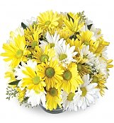 Flower Bouquets: Daisy Bowl